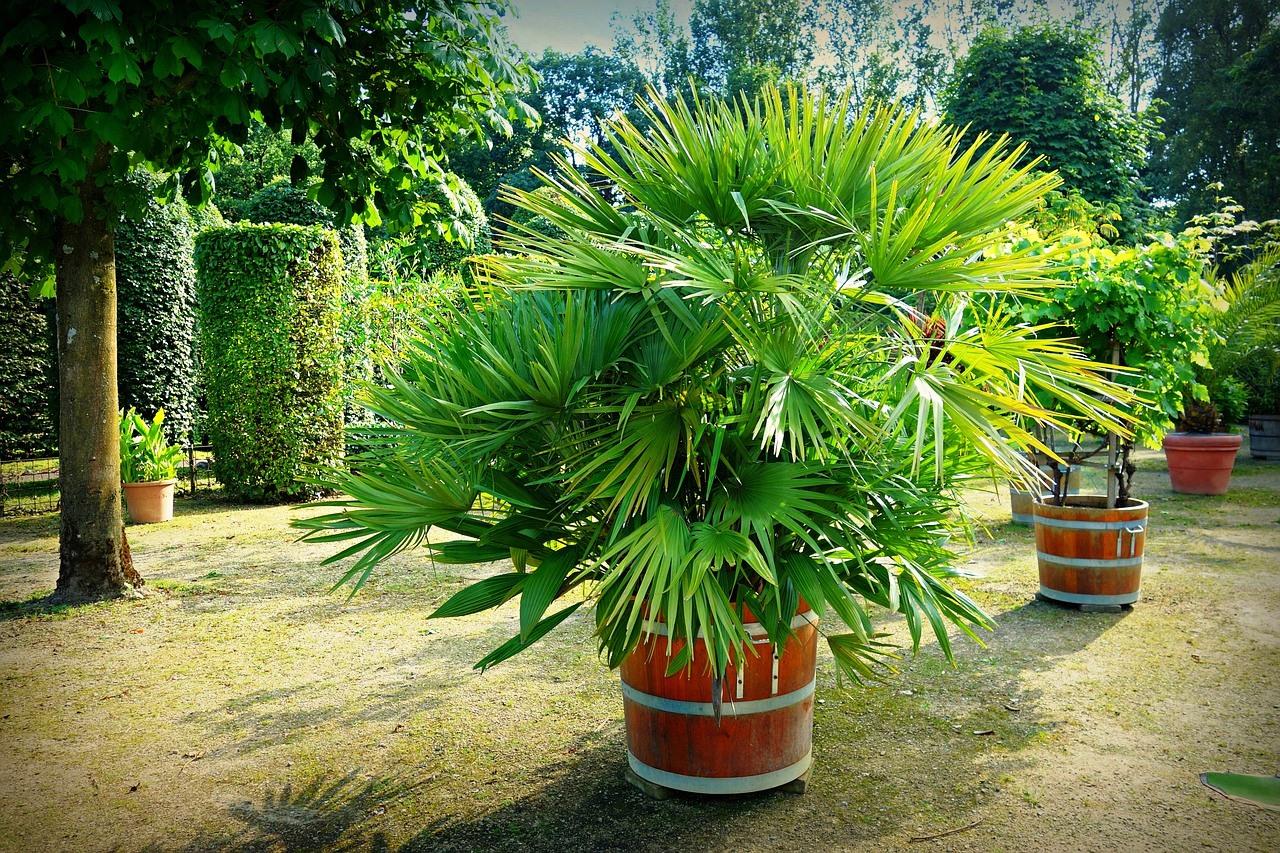 Jak przezimowa ro liny egzotyczne bambusowy sen for Plante ornementale des jardins